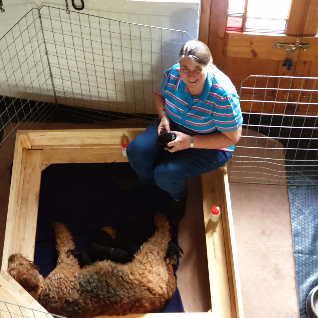 Jenny feeding Airedale Terrier puppy